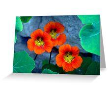 Flower - 13 Greeting Card