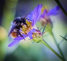 Bumblebee on Neon Flower by Nicole Petegorsky