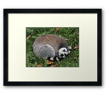 Listening To Dreams In The Grass Framed Print