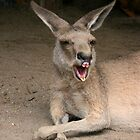 Yawning Kangaroo by Katja Fønss