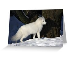 Arctic Fox. Greeting Card
