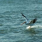 Surfing Pelican by Robert Brown