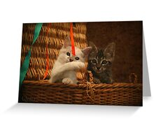 Cute Kittens Greeting Card