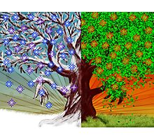 Big tree winter and summer seasons Photographic Print