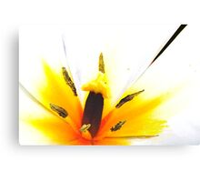 Sunshine tulip Canvas Print