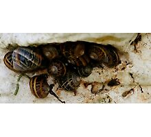 Snails on a Lighthouse Wall Photographic Print