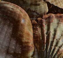 Shellscape by MidnightAkita