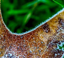 Morning frost in winter by Luke Farmer