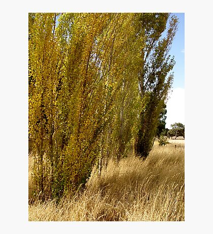 photoj S.A. Adelaide Hills Photographic Print