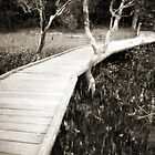 Mangrove boardwalk by Duncan Waldron