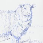 Sheep Drawing by MikeJory
