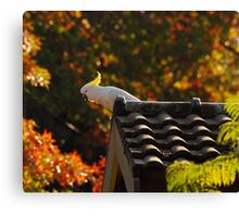 Autumn Cocky Canvas Print