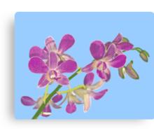 Orchid: Phalenopsis equestris Canvas Print