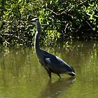 Heron on lake by Chris  Hayworth