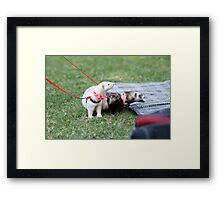 Eyes Right Framed Print
