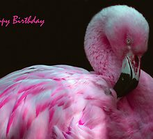 Happy Birthday by Linda More