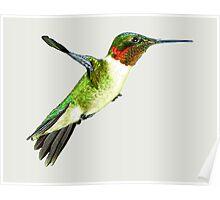 Hummingbird In Flight Poster