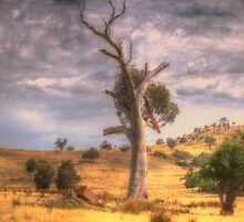 Strength - Lake Hume, Albury NSW - The HDR Experience by Philip Johnson