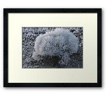 Hoarfrost Framed Print