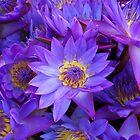 Flower Manel by nilantha77