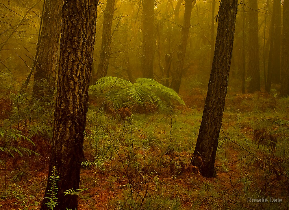 Primeval Forest by Rosalie Dale