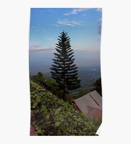 Hillside Fir Tree Poster