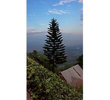Hillside Fir Tree Photographic Print