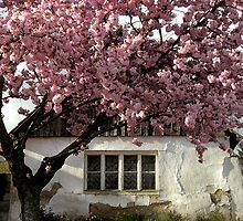home sweet home ... by Dan Shalloe