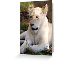 Adolescent Male White Lion Greeting Card