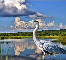 Heron in the Water BEAUTIFUL PILLOWS AND OR TOTE BAGS PICTURE -CARD ECT by ✿✿ Bonita ✿✿ ђєℓℓσ