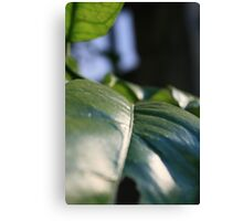 Brush of Leaf Canvas Print