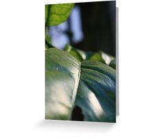 Brush of Leaf Greeting Card