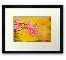 Wild Azalea Blossoms - Rhododendron canescens Framed Print