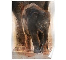 Vintage Asian Baby Elephant Poster