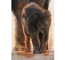 Vintage Asian Baby Elephant Photographic Print