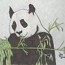 Panda! by Dylan Mazziotti