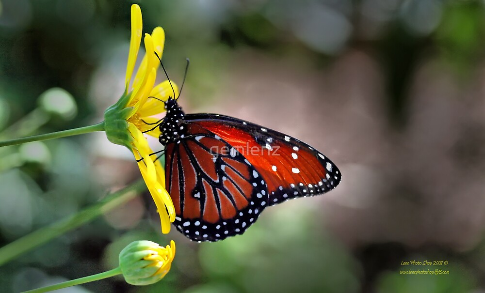 Spotted Butterfly by George Lenz