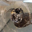 Black Widow out to lunch by Teri Billington