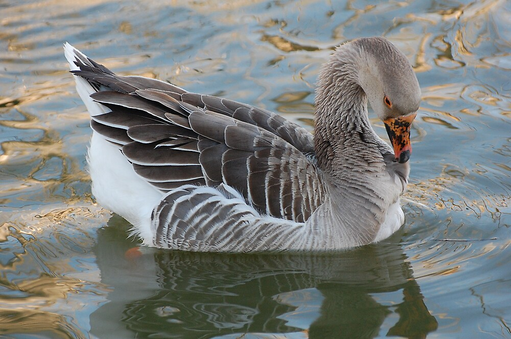 Self-cleaning Goose by Teri Billington