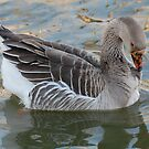 Self-cleaning Goose by Teri Billington