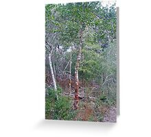Wild Holly Trees - Buxton - Hatteras Island - North Carolina - Outer Banks Greeting Card