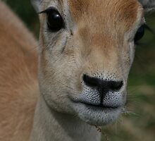 up close and cute by liz estes