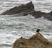 Fishing Eagle by Greg Lester