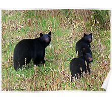 The Bear Trio Poster