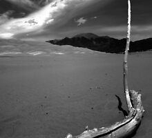 Undisturbed at Great Sand Dunes National Park by Ryan Wright