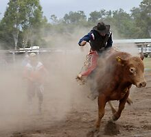 Bucking Bull & Bull-Dust by Michael Norris