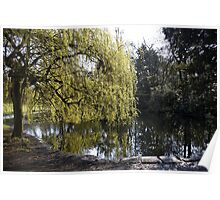 Reflections in a pond Poster