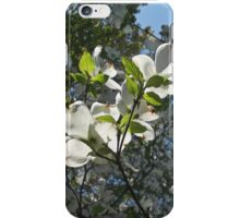 Dogwood Tree Blossoms  iPhone Case/Skin