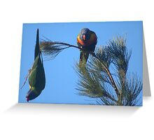 Lorikeets.. Greeting Card