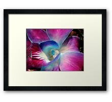 Singapore Orchid Framed Print